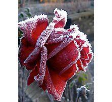 Frozen Rose Photographic Print