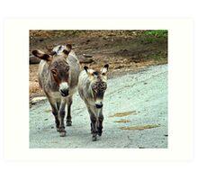 Donkeys Art Print