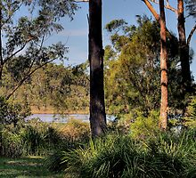 By the Lake at Moonee by Peter Bodiam