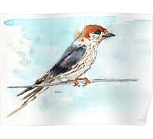 My swallows are back! Poster