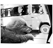 travelling dog Poster