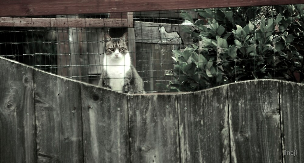Right out My Backyard Series: Cat with No Name by linaji