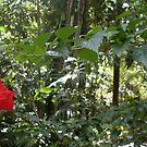 Red Flower - Harna by EveryoneHasHope