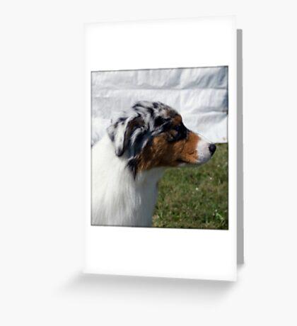 Australian Shepherd Profile Greeting Card