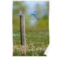 Mr & Mrs Blue Bird Poster
