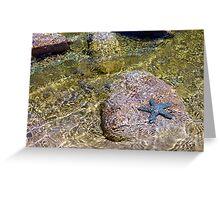 Faux starfish Greeting Card