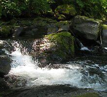 Sweet Creek by Sarah Trent