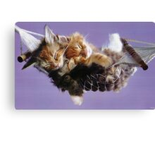 Kittens on a hammock Canvas Print