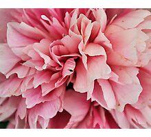 Pinker Photographic Print