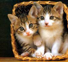 Basket full of love by cattitudenwhisk