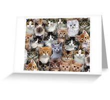 Moggy Muriel Greeting Card