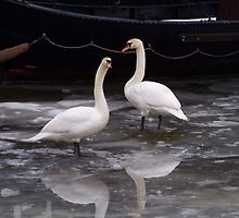 Swans On Frozen Amsterdam Canal by AnnoNiem Anno1973