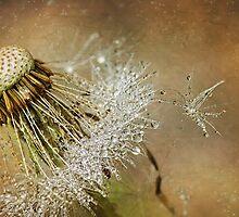 Dandelion drops by Lyn Evans
