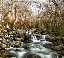 Middle Fork of the Little Pigeon River by Phillip M. Burrow
