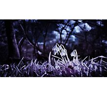 Infrared Snowdrops Photographic Print