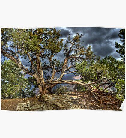 Canyon Tree Poster