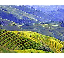 Rice terraces in Longsheng Photographic Print