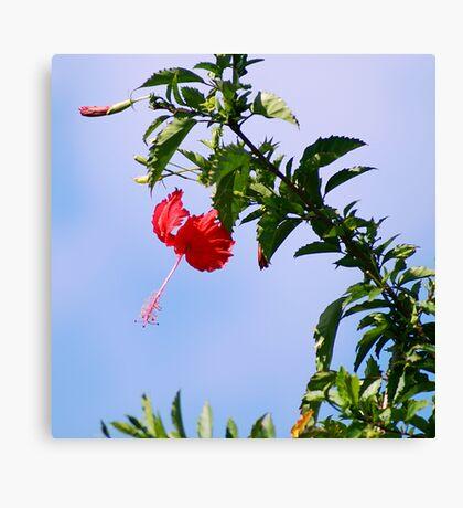 Exotic Bloom Canvas Print