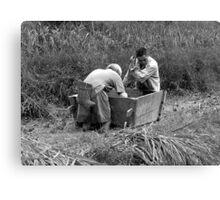 Rice farmers Canvas Print