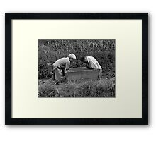 Rice farmers Framed Print