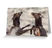 Elk Skirmish Greeting Card