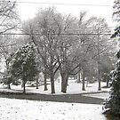 Feb. 19 2012 Snowstorm 2 by dge357