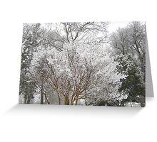 Feb. 19 2012 Snowstorm 6 Greeting Card
