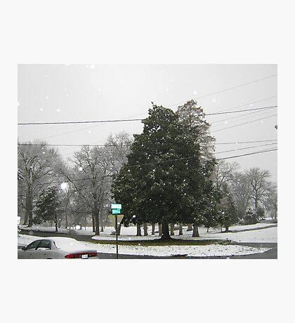 Feb. 19 2012 Snowstorm 7 Photographic Print