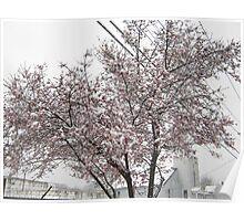 Feb. 19 2012 Snowstorm 10 Poster