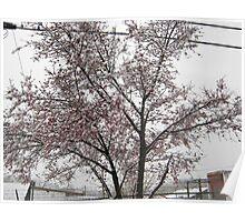 Feb. 19 2012 Snowstorm 11 Poster