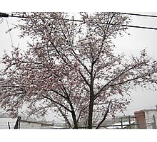 Feb. 19 2012 Snowstorm 11 Photographic Print