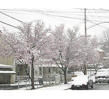 Feb. 19 2012 Snowstorm 12 Photographic Print