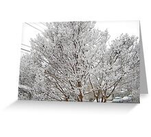 Feb. 19 2012 Snowstorm 13 Greeting Card