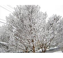 Feb. 19 2012 Snowstorm 13 Photographic Print