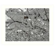 Feb. 19 2012 Snowstorm 15 Art Print