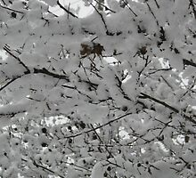 Feb. 19 2012 Snowstorm 15 by dge357