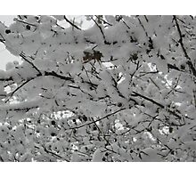 Feb. 19 2012 Snowstorm 15 Photographic Print