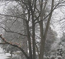 Feb. 19 2012 Snowstorm 16 by dge357