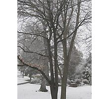 Feb. 19 2012 Snowstorm 16 Photographic Print