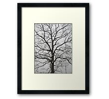 Feb. 19 2012 Snowstorm 18 Framed Print