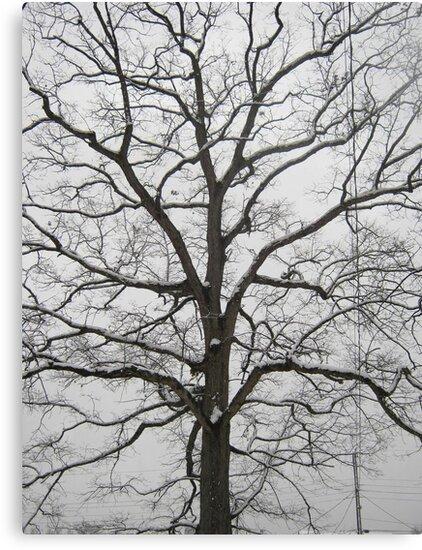 Feb. 19 2012 Snowstorm 18 by dge357