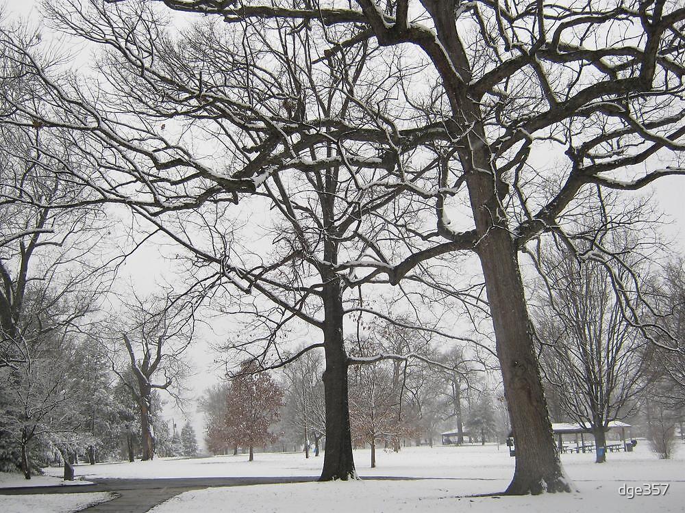 Feb. 19 2012 Snowstorm 19 by dge357