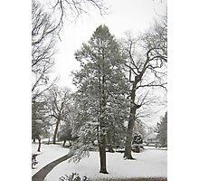 Feb. 19 2012 Snowstorm 20 Photographic Print