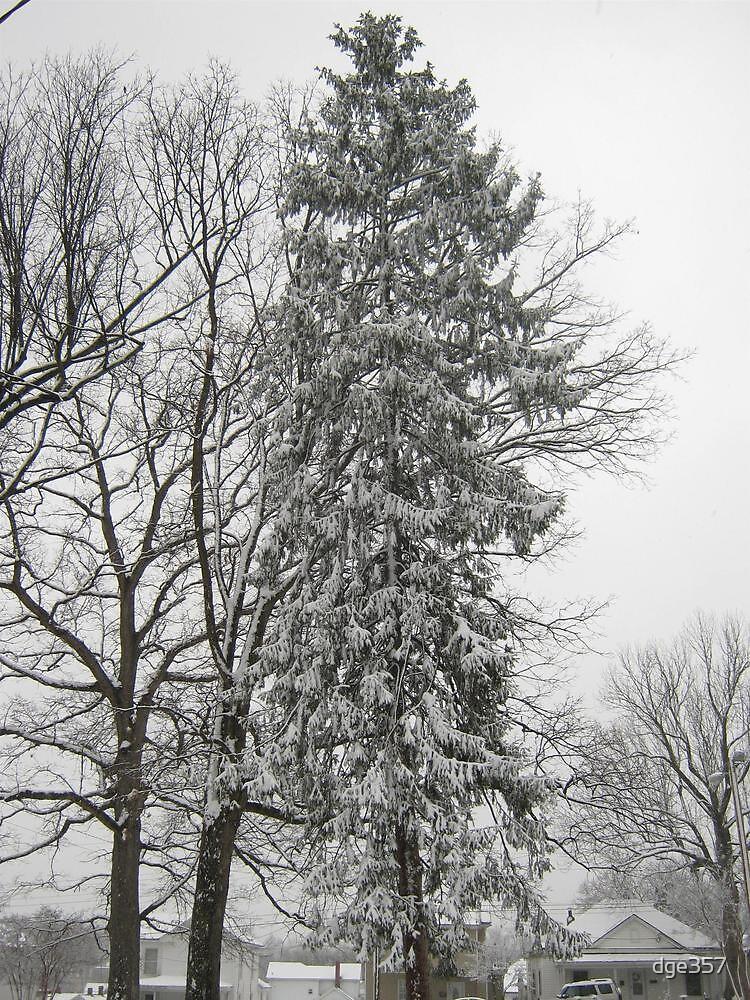 Feb. 19 2012 Snowstorm 21 by dge357
