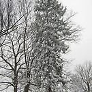 Feb. 19 2012 Snowstorm 21 by dge357