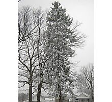 Feb. 19 2012 Snowstorm 21 Photographic Print