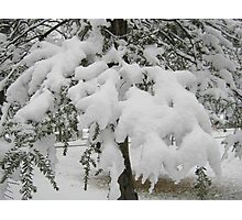 Feb. 19 2012 Snowstorm 23 Photographic Print