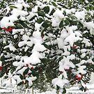 Feb. 19 2012 Snowstorm 24 by dge357