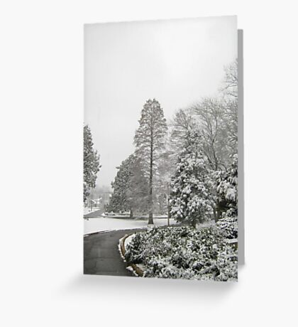 Feb. 19 2012 Snowstorm 26 Greeting Card