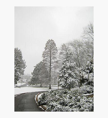 Feb. 19 2012 Snowstorm 26 Photographic Print
